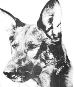 Interview with Rin Tin Tin